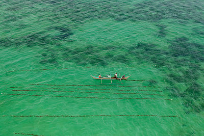 Aerial view of a seaweed farmer tending his crop, growing agar-agar for processing into carageenan (gelatinous extracts used ...