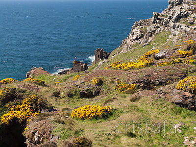 near Botallack on the north coast of Penwith