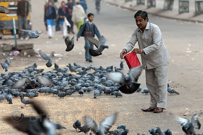 A man feeding pigeons in Jodhpur, Rajasthan, India
