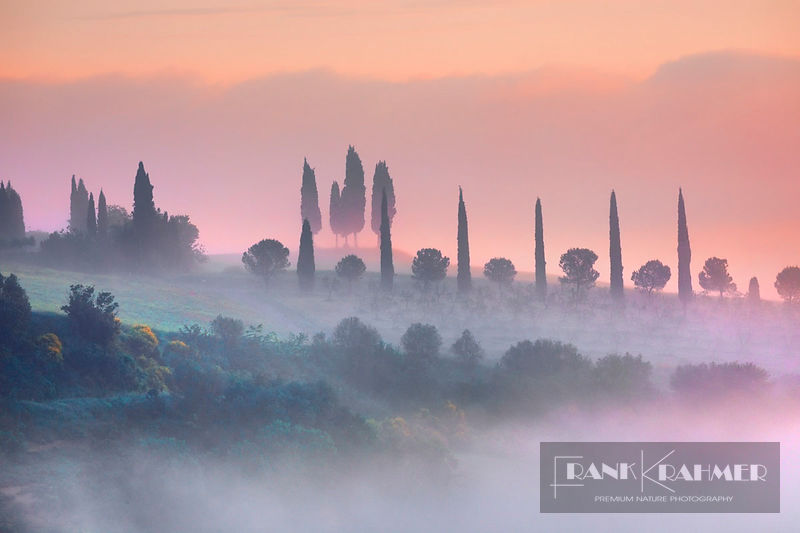 Tuscany landscape with cypresses in fog - Europe, Italy, Tuscany, Siena, Val d'Orcia, San Quirico d'Orcia - Pienza - digital