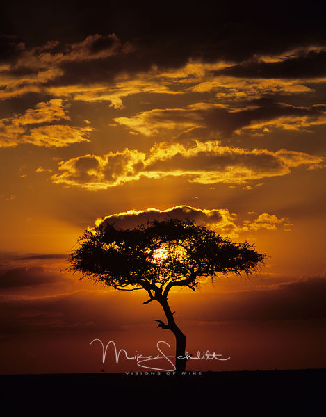 Africa_Sunrise_Acatia_tree_cropped_verticle