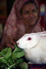 A woman feeds greens to her pet rabbit in Pushkar, Rajasthan, India
