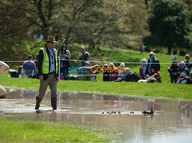 Fence judge herds ducklings to safety at Chatsworth