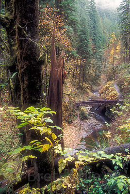 A hiker rests on a footbridge (in the distance) across Silver Creek, Silver Falls State Park, Oregon.