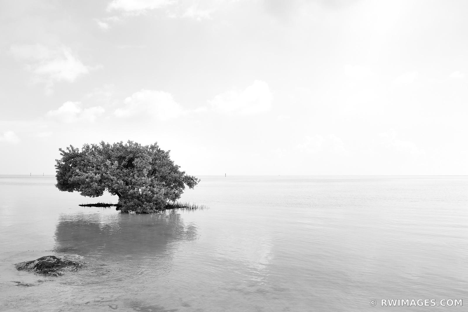 MANGROVE TREE AND THE OCEAN ANNE'S BEACH ISLAMORADA LOWER MATECUMBE KEY FLORIDA KEYS LANDSCAPE BLACK AND WHITE