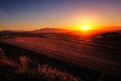 Sunrise over farmland