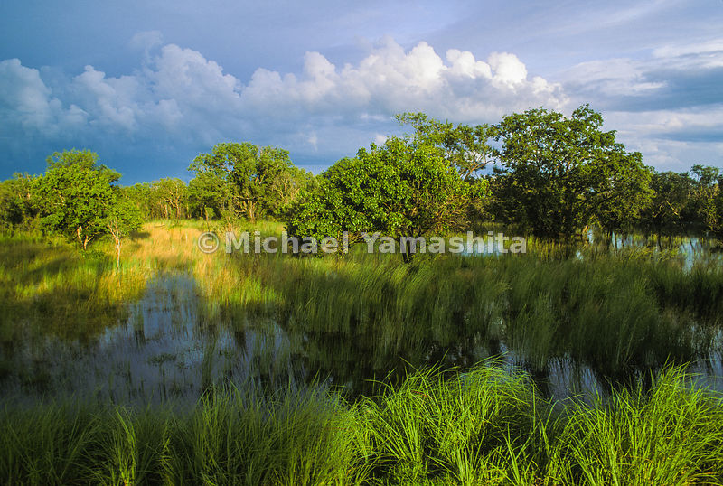 Marsh reflections in Kakadu National Park.