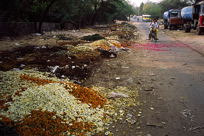 India - Delhi - Boys ride a bicycle past discarded blossoms at the Flower Market, Mehrauli