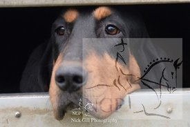 highmoor_n_bloodhounds_23_12_18_0013