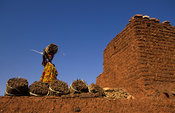 Woman storing millet on a typical flat topped  roof, Songo, Dogon Country, Mali