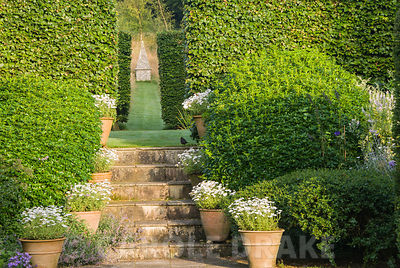 Steps decorated with pots of white daisies lead up to another part of the garden framed by mounds of Choisya ternata. Through...