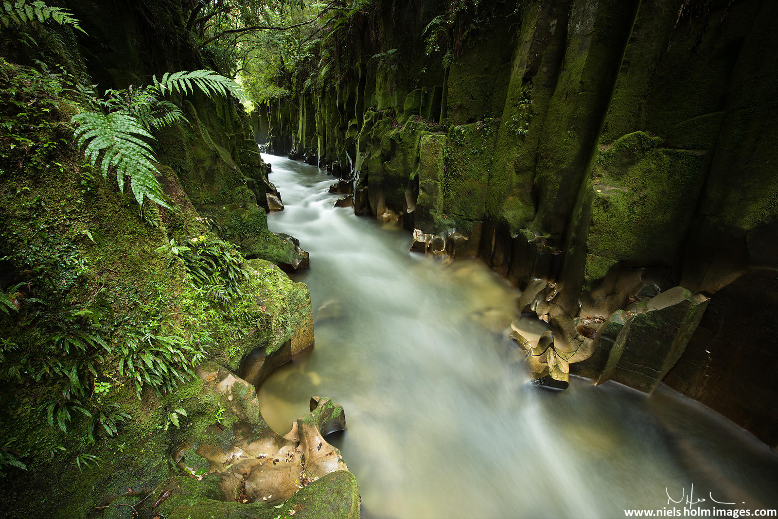 Nui A Toi Canyon, Whirinaki Conservation Park - New Zealand