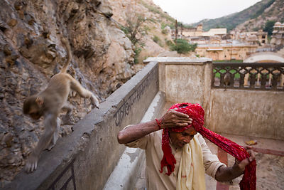 India - Rajasthan - A monkey walks past a man as he ties his turban after bathing in the pool at The Surya Mandir (known as the Monkey Temple)