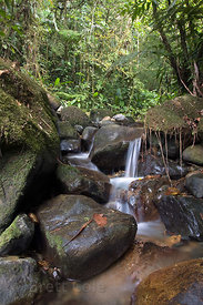 Detail in a tributary to the Rio Penas Blancas, Las Nubes, Costa Rica