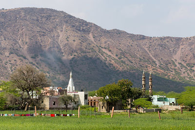 Hindu temple amid wheat fields and mountains, Doomara village, Rajasthan, India