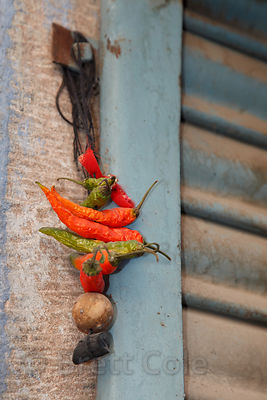 """Good luck charms"" in essence, a common sight on the doorways of homes and businesses in Rajasthan, India"