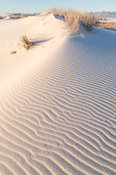 Morning Light on Sand Dune