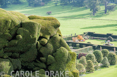 Massive undulating yew hedge at Powis Castle Gardens with Formal and Fountain gardens below