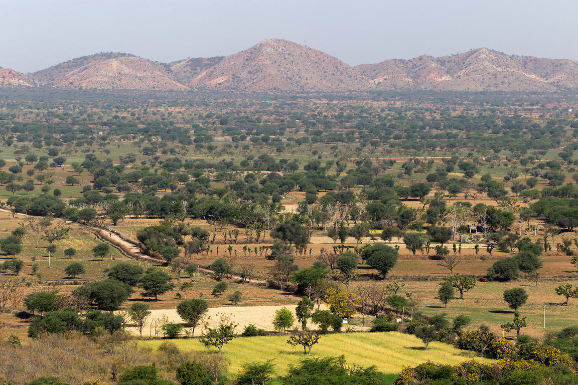 Beautiful country in the irrigated Thar Desert, near Picholiya village, Rajasthan, India