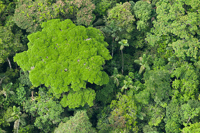 Aerial view of rainforest Canopy. Yasuni National Park, Amazon Rainforest, Ecuador, South America