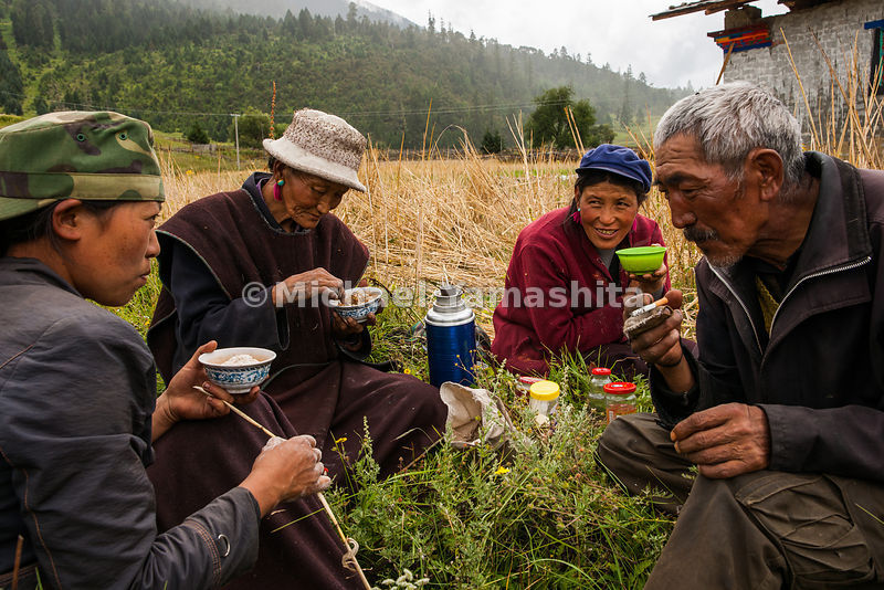 A family of farmers take a tea break before getting back to harvesting barley, which is mixed with yak butter tea to prepare ...