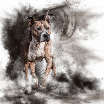 Art-Digital-Alain-Thimmesch-Chien-85