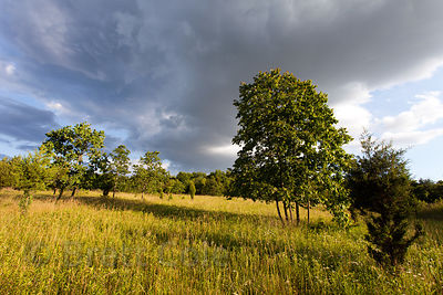 Late light on a meadow in early summer, Green Farm Park, Maryland