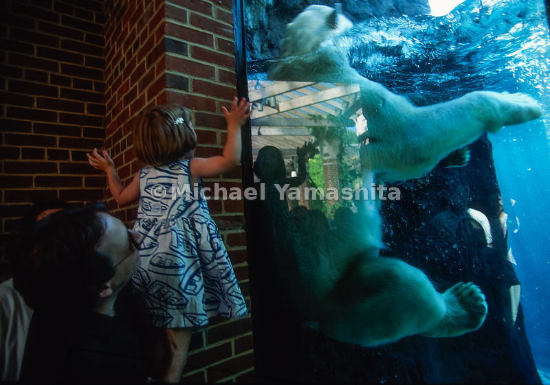 Polar Bear Exhibit .Central Park Zoo.New York City, NY