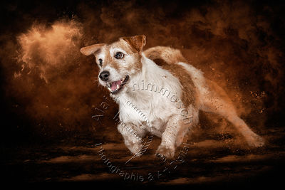 Art-Digital-Alain-Thimmesch-Chien-830