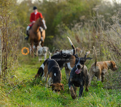 The Quorn Hunt at Great Dalby 14/11 photos
