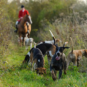 The Quorn Hunt at Great Dalby 14/11