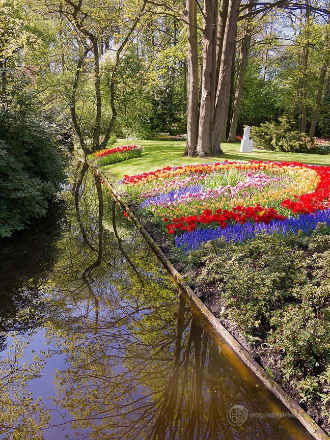 Netherlands - Keukenhof (Flower Bed and Water Reflections)