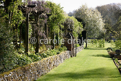 Pergola hanging with wisteria buds, frosted on a very cold April morning at Heale House, Middle Woodford, Wiltshire
