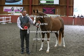 Classes 13, 14, 15 and Pure Bred Gelding Championship