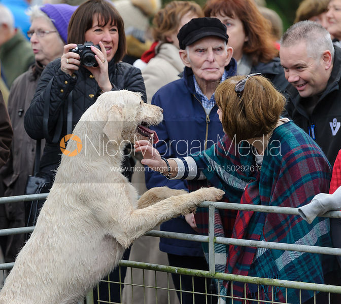 A Cottesmore hound meets the Oakham public