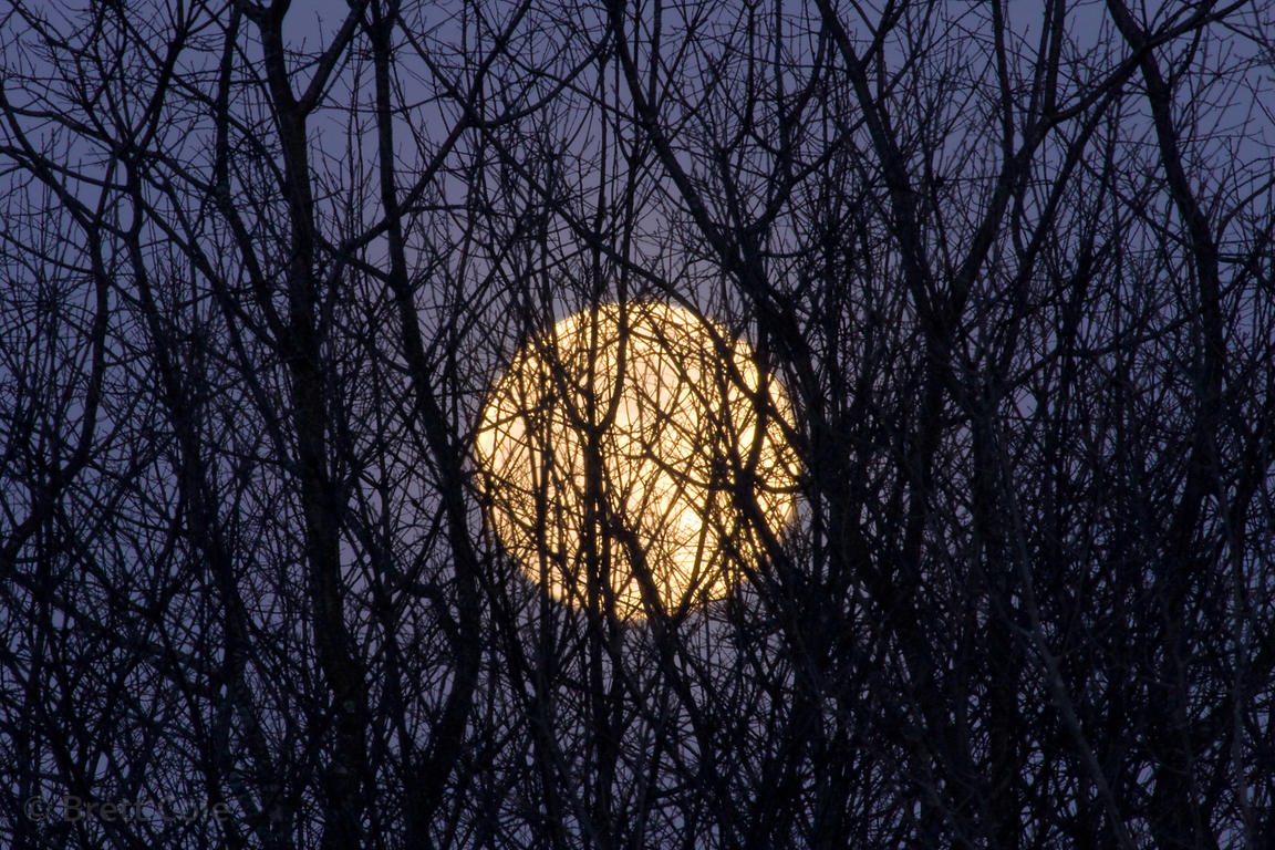Full moon rising through a thicket on a farm in the Hudson Valley, New York