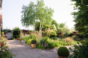 The front garden is planted with many small trees including Cornus controversa variegata, acers and white stemmed birches,  B...