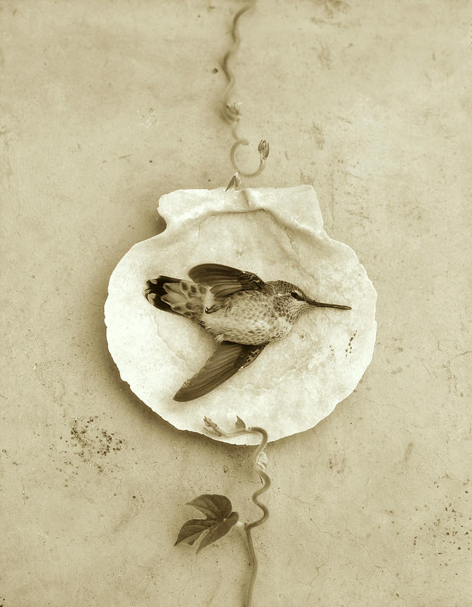 hummingbird laying on shell