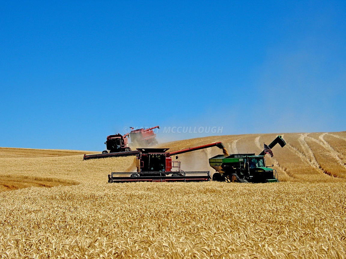Three_combines_and_bankout_easter_Oregon_winter_wheat