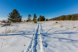 Snowy Trail in Rosy Mound Natural Area Leading to the Lake Michigan Shore