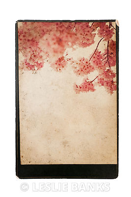 Vintage Cherry Blossoms