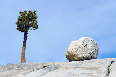 A pine tree and boulder stand in isolation on a rocky slope, Yosemite National Park, California.