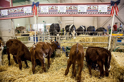Dairy barn at the State Fair
