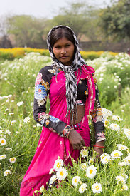 A girl works on a flower farm, Shrinagar, Rajasthan, India