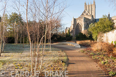 Wells Cathedral seen from the Garden of Reflection in the Bishop's Palace garden on a November morning