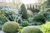 View from the drive across clipped yew spheres with a rich medley of trees and shrubs beyond including serrated yew hedge. Yo...