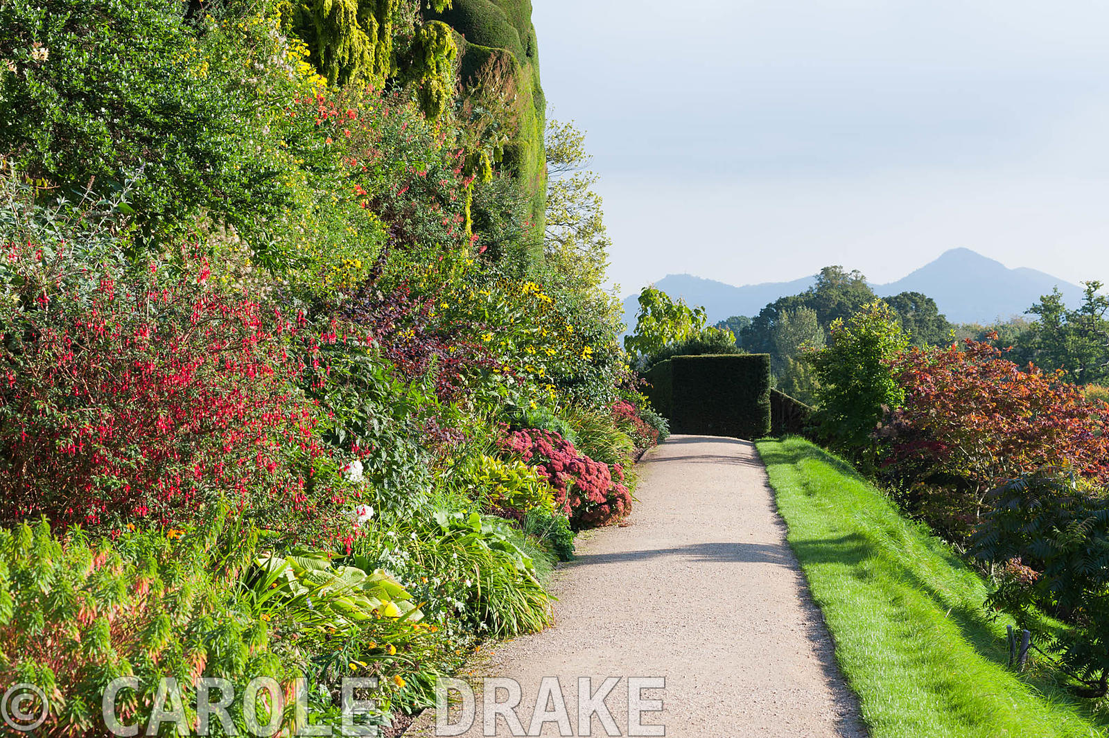 Borders on the Lower Terrace at Powis Castle Garden in autumn full of sedums, euphorbias, fuchsias and rudbeckias