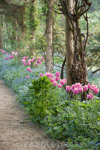 Pergola in the Walled Garden is underplanted with pink Tulipa 'Ballade' and blue Brunnera macrophylla, while later in the sea...