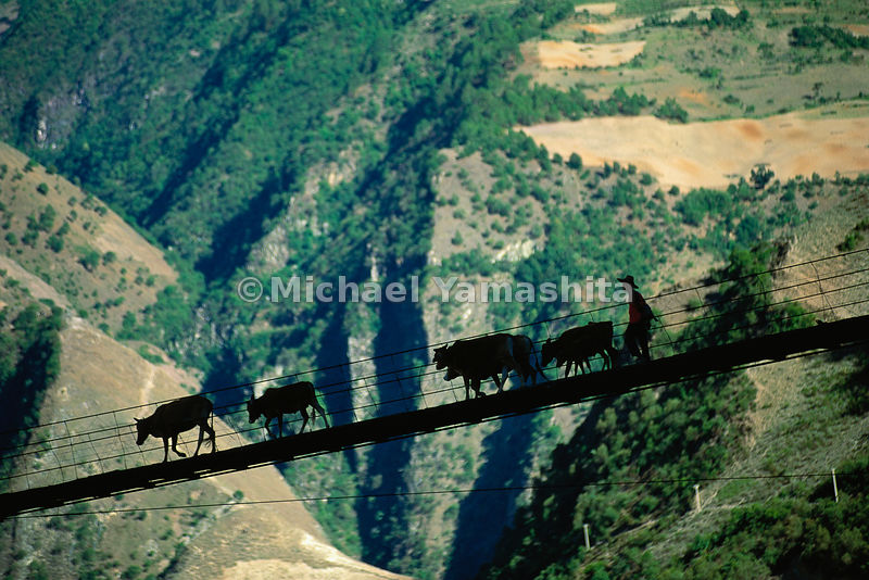 A herdsman leads his cattle across a bridge suspended high above a chiseled gorge carved by the Mekong River — the Mother of Waters and a vital artery providing sustenance for much of southeast Asia. Marco Polo crossed a similar bridge strung over the river, known as the Lancang Jiang (Turbulent River) in Yunnan as it flows south from the Tibetan plateau.  Yunnan, China