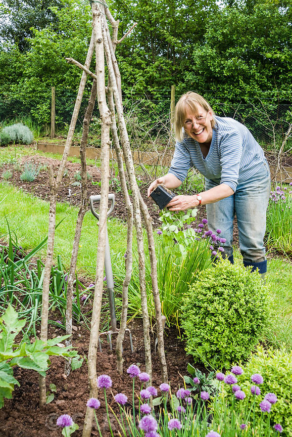 Linda Lindley planting sweetpeas to climb a hazel wigwam in the vegetable garden. Hidden Valley Nursery, Old South Heale, Hig...